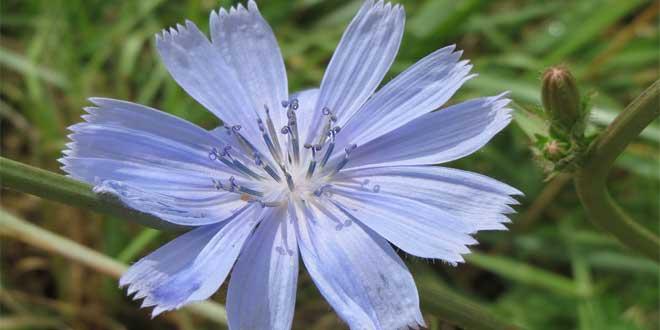 Das typische Bild für den negativen Chicory-Zustand ist die bedürftige Mutter.