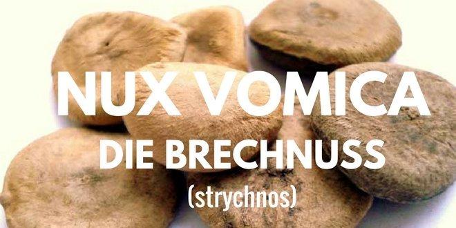 Der getrocknete Samen der Nux-vomica (Brechnuss) ist die wesentliche Arzneidroge.