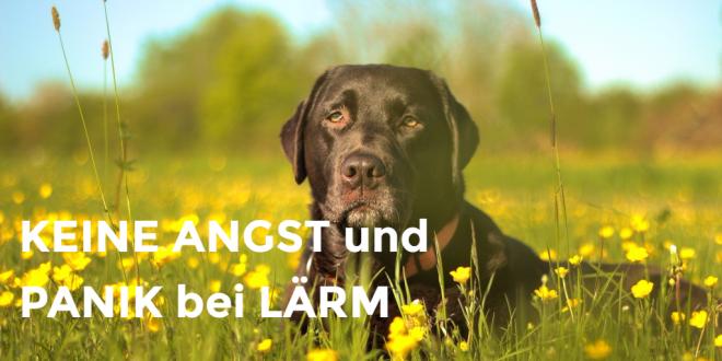 Bachblüten für Hunden können bei einem Tierarztbesuch oder eine Ausstellung als Tropfen verabreicht werden.