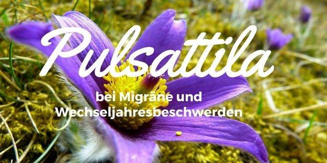Pulsatilla bei Schmerzen und Entzündungen