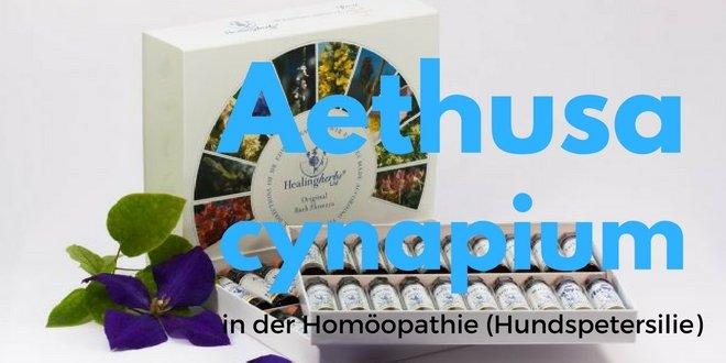 Aethusa cynapium D6 in der Homöopathie (Hundspetersilie)