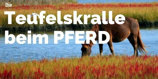 Teufelskralle ist ein Naturprodukt zur Behandlung beim Pferd.