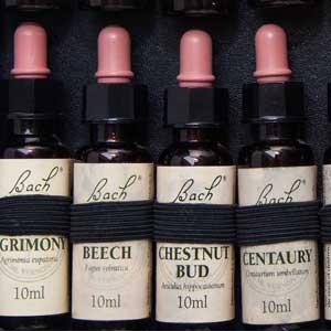 Die Bach-Blütentherapie verwendet 38 verschiedene Bachblüten.