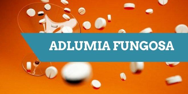 Adlumia, auch als Adlumia fungosa bezeichnet