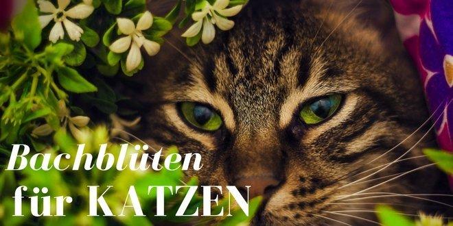 Die Bachblüten für Katzen werden anders hergstellt als die für Menschen.