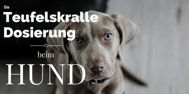 Schmerzen und Entzündung beim Hund werden durch die Teufelskralle gelindert.